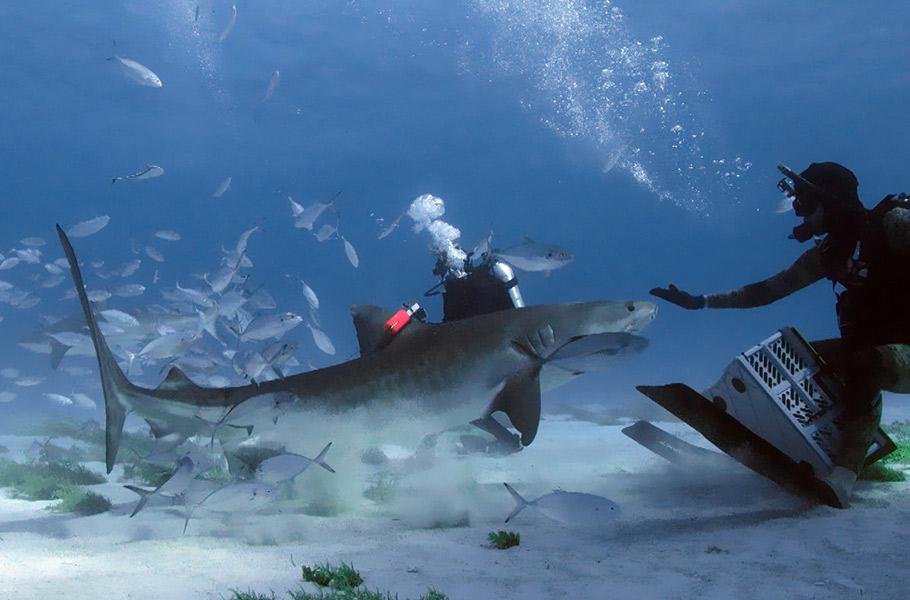 Forecast_Shark_Attack