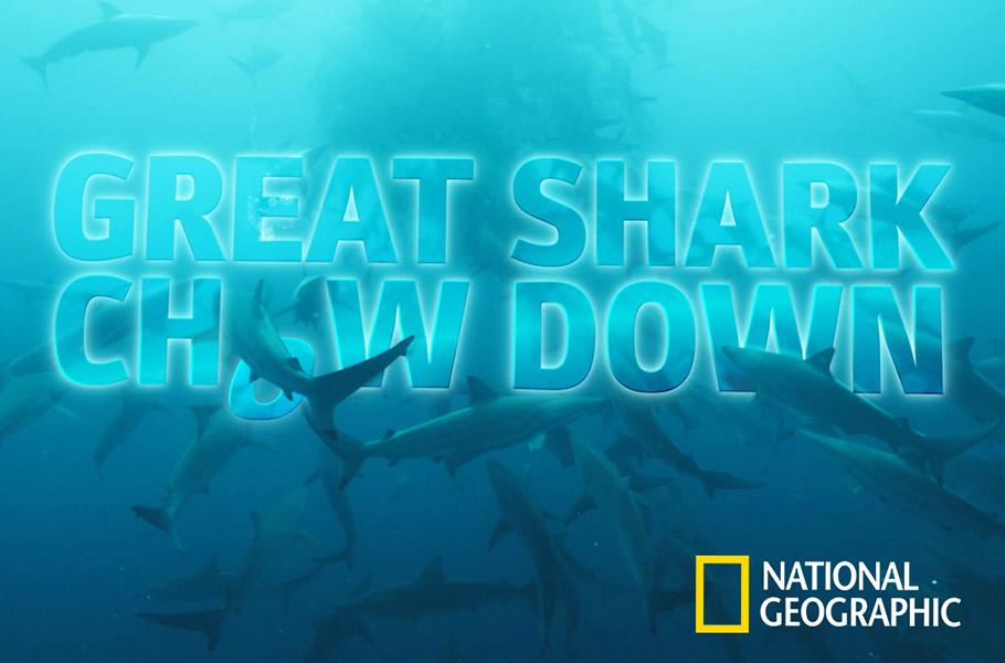 Great Shark Chowdown