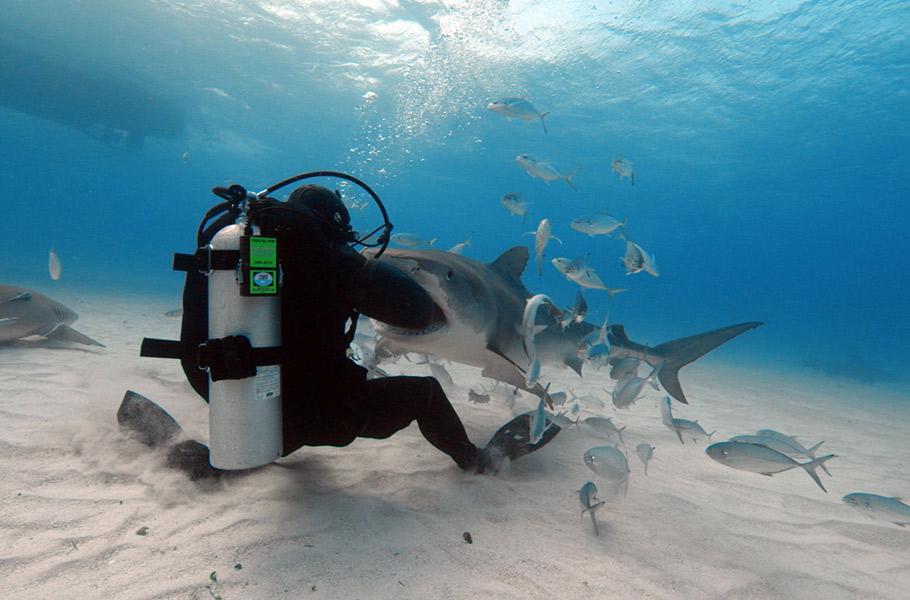 Man_vs_Shark